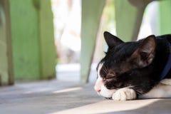 Gato blanco y negro que duerme con el calor de la luz del sol Foto de archivo