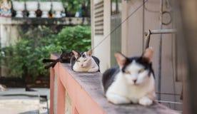 Gato blanco y negro que duerme en la cerca de la casa, en el o Imagenes de archivo
