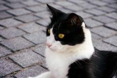 Gato blanco y negro que miente en el pavimento Fotografía de archivo libre de regalías