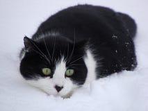 Gato blanco y negro que se escabulle en la nieve Foto de archivo