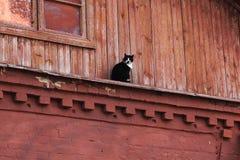 Gato blanco y negro que se sienta en el edificio de madera rojo Gato en la casa de campo foto de archivo