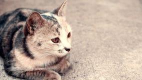 Gato blanco y negro que se sienta en fondo concreto Foto de archivo