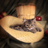 Gato Bobtail Fotografia de Stock Royalty Free