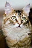 Gato bonito imagens de stock royalty free