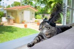 Gato bonito Fotos de archivo libres de regalías