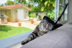 Gato bonito Fotografía de archivo