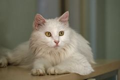 Gato bonito. Foto de Stock Royalty Free