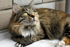 Gato bonito. Imagens de Stock