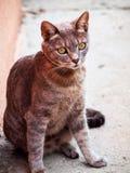 Gato bonito Foto de Stock Royalty Free