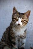 Gato bonito Fotografia de Stock