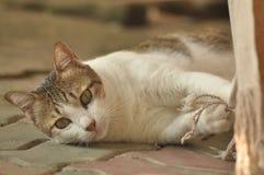 Gato bonito Foto de archivo