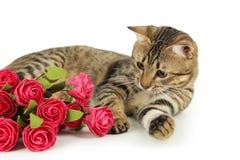 Gato bonito com as flores no fundo branco Fotografia de Stock