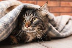 Gato bonito com a cobertura no assoalho inverno morno e acolhedor fotos de stock royalty free