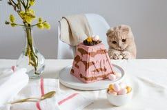 Gato bonito com o ovo da p?scoa na tabela servida festiva Telem?vel amarelo Alimento tradicional da P?scoa Copie o espa?o imagens de stock