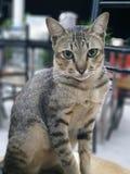 Gato bonito com olhos verdes fotos de stock royalty free