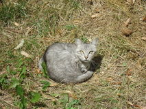 Gato bonito da rua Imagem de Stock