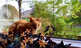Gato bonito del jengibre Imagen de archivo libre de regalías
