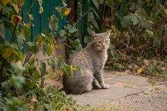 Gato bonito desabrigado do gato malhado cinzento que senta-se na rua com um olhar triste imagem de stock royalty free