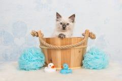 Gato bonito do gatinho da boneca de pano em uma cesta de madeira Fotografia de Stock Royalty Free