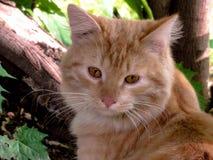 Gato bonito do pêssego em uma árvore grande imagens de stock