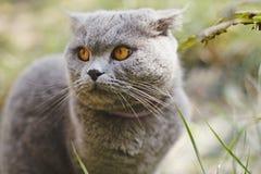 Gato bonito do retrato da cor cinzenta imagem de stock
