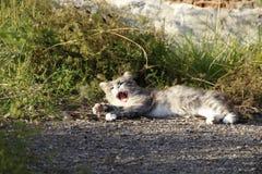 Gato bonito e macio imagens de stock royalty free