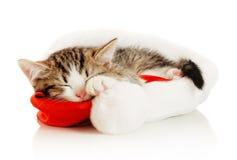 Gato bonito em um tampão de ano novo foto de stock
