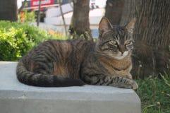 Gato bonito fotografado de uma distância próxima imagem de stock