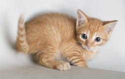 Gato bonito isolado no fundo branco que olha a câmera com olhos azuis imagens de stock royalty free