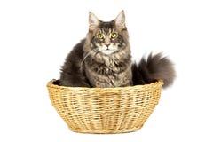 Gato bonito isolado sobre o fundo branco Imagens de Stock