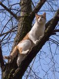 Gato bonito na ?rvore imagens de stock royalty free