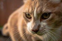 Gato bonito na jarda que olha à esquerda imagens de stock