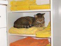 Gato bonito na prateleira com toalhas Fotos de Stock Royalty Free
