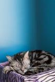Gato bonito no assoalho foto de stock royalty free