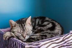 Gato bonito no assoalho fotografia de stock