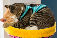 Gato bonito no assoalho Fotos de Stock