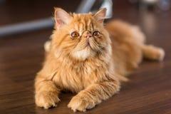 Gato bonito no assoalho imagem de stock