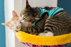 Gato bonito no assoalho Fotografia de Stock Royalty Free