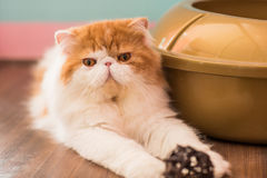 Gato bonito no assoalho Imagem de Stock Royalty Free