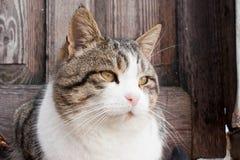 Gato bonito no fundo de uma porta de madeira velha imagem de stock royalty free