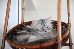 Gato bonito no modo sonolento fotos de stock
