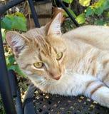 Gato bonito no outono Imagem de Stock Royalty Free