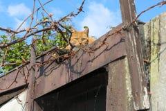 Gato bonito no telhado e em torno dos fios e da árvore decíduo no fundo imagens de stock royalty free