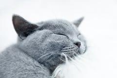 Gato bonito novo que descansa na pele branca Fotografia de Stock