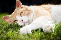 Gato bonito oxidado que relaxa no jardim botânico enorme durante o Beau Imagens de Stock