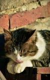 Gato bonito que aprecia sua vida Imagens de Stock Royalty Free