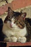 Gato bonito que aprecia sua vida Imagens de Stock
