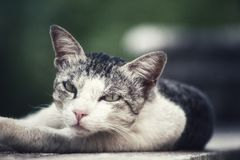 Gato bonito que coloca no meio da parede fotografia de stock royalty free