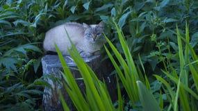 Gato bonito que descansa em um coto no jardim foto de stock