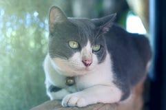 Gato bonito que encontra-se na parede de tijolo Imagem de Stock